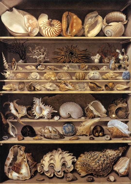 Alexandre-Isidore_Leroy_De_Barde_-_Selection_of_Shells_Arranged_on_Shelves_-_WGA12903