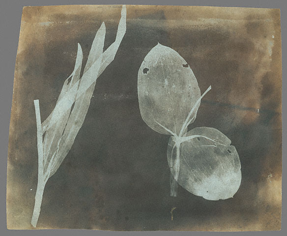 William_Henry_Fox_Talbot_-_Leaves_of_Orchidea