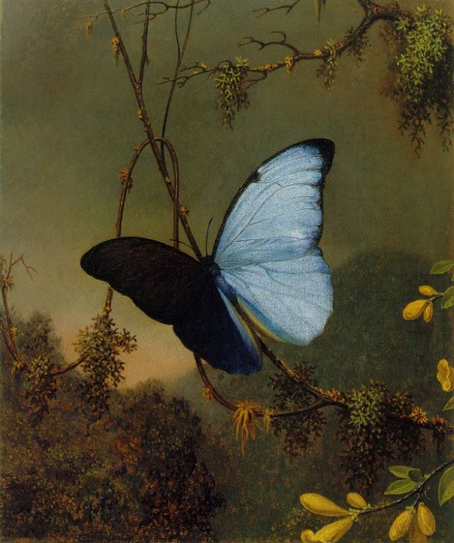 Martin_Johnson_Heade_-Blue_Morpho_Butterfly_ATC